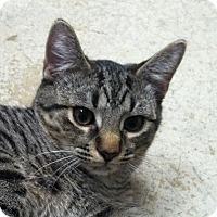 Adopt A Pet :: Dewie - Huntsville, AL