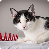 Adopt A Pet :: Jack Jr. - Lambertville, NJ