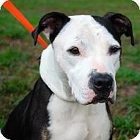 Adopt A Pet :: Elizabeth - Gainesville, FL
