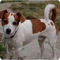 Adopt A Pet :: PeeWee - San Francisco, CA