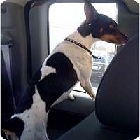 Adopt A Pet :: Russell - Fowler, CA