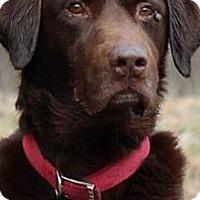 Adopt A Pet :: Storm - Brattleboro, VT