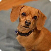Adopt A Pet :: Charlie - Los Angeles, CA