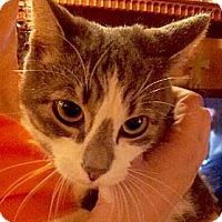 Adopt A Pet :: Swizzle - Brooklyn, NY