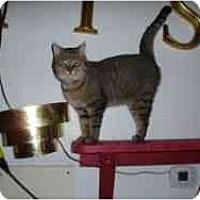 Adopt A Pet :: Linus - Hamburg, NY