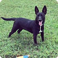 Adopt A Pet :: Lily May - Marietta, GA