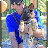 Adopt A Pet :: Kenna (Sable) - Phoenix, AZ