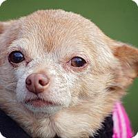 Adopt A Pet :: Charo - Decatur, GA