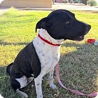 Adopt A Pet :: Maybelle - Phoenix, AZ
