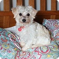Adopt A Pet :: Eldon - Troy, MI