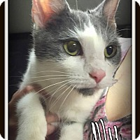 Adopt A Pet :: Ally - Salem, OH