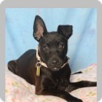 Adopt A Pet :: Isabella - Pittsboro, NC