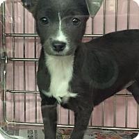 Adopt A Pet :: Audree - Modesto, CA