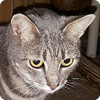 Adopt A Pet :: Jade - Winchester, CA