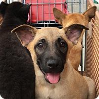 Adopt A Pet :: Giovanni - La Quinta, CA