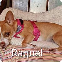 Adopt A Pet :: Raquel - Encinitas (San Diego), CA