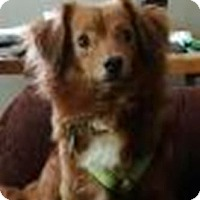 Adopt A Pet :: Lucy - Beavercreek, OH