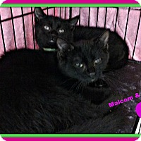 Adopt A Pet :: Malcolm and Celeste - Cranston, RI