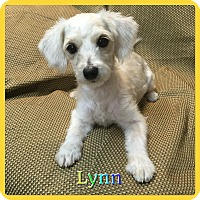 Adopt A Pet :: Lynn - Hollywood, FL