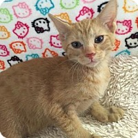 Adopt A Pet :: STARKEY - Fountain Hills, AZ