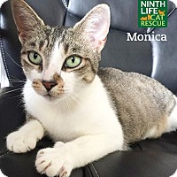 Adopt A Pet :: Monica - Oakville, ON