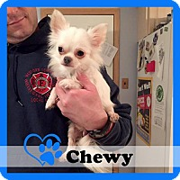 Adopt A Pet :: Chewy - Medford, NJ