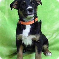 Adopt A Pet :: NOLA - Westminster, CO