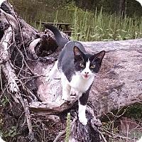 Adopt A Pet :: Cuddles - Fischer, TX
