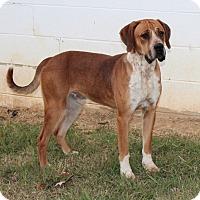 Adopt A Pet :: Goober - Harmony, Glocester, RI