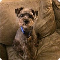Adopt A Pet :: Spanky - Memphis, TN