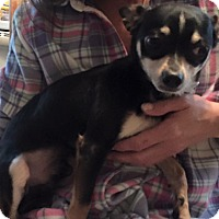 Adopt A Pet :: Jake - Kettering, OH