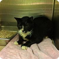 Adopt A Pet :: Endearing Edward  (Portia-13EE) - Trenton, NJ