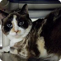 Adopt A Pet :: Cami - Elyria, OH