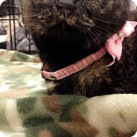 Adopt A Pet :: Tiffany - Social Sweetheart - South Bend, IN