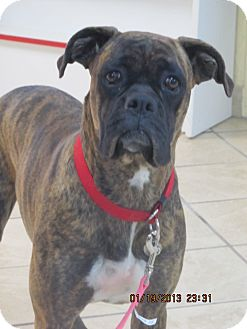 Boxers for Sale in El Paso   Dogs on Oodle Classifieds
