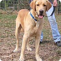 Adopt A Pet :: Baron - Spring, TX