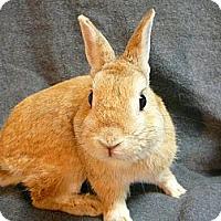Adopt A Pet :: Baps - Newport, DE