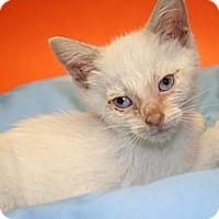 Adopt A Pet :: DEMETRIUS - SILVER SPRING, MD