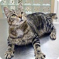 Adopt A Pet :: Ralphie - Chicago, IL