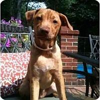 Adopt A Pet :: Ruth - Alexandria, VA