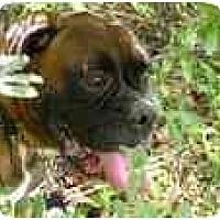 Adopt A Pet :: Broudy - Thomasville, GA
