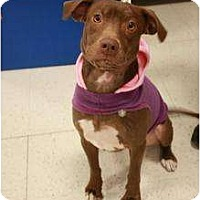 Adopt A Pet :: Desirae - Arlington, TX
