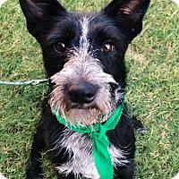 Adopt A Pet :: Greyson - Knoxville, TN
