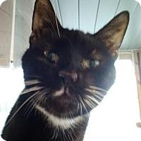 Adopt A Pet :: Waldo - Delmont, PA