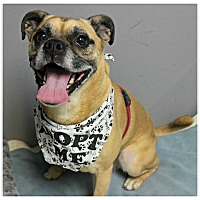 Adopt A Pet :: Lady - Forked River, NJ