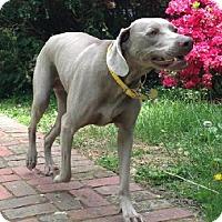 Adopt A Pet :: Tula - Birmingham, AL