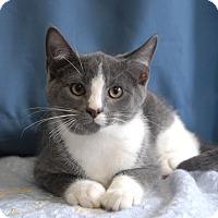 Adopt A Pet :: Buzz - Winchendon, MA