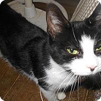 Adopt A Pet :: Cassie - N. Berwick, ME