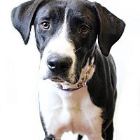Adopt A Pet :: Chance - McKinney, TX