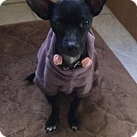 Adopt A Pet :: Missy - Las Vegas, NV